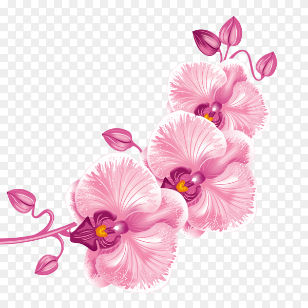 Spring rose flower preumim vectro PNG