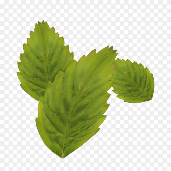 Three Green Leaves on trasparent PNG