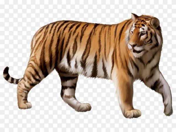 Tiger Cartoon on transparent background PNG