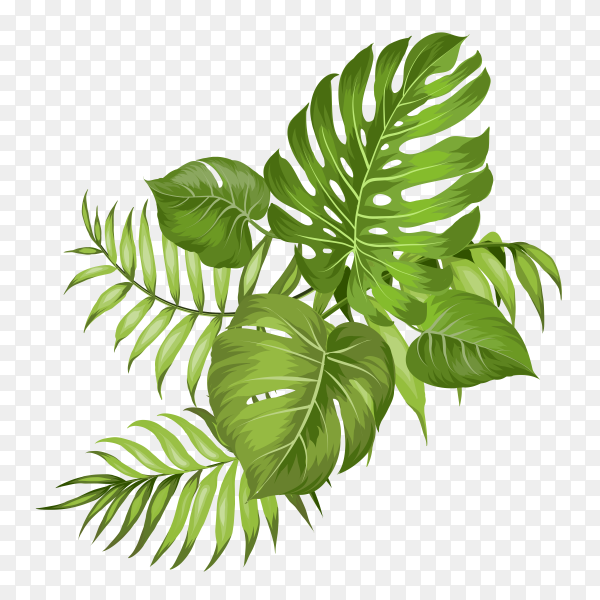 Tropical palm branches vector PNG