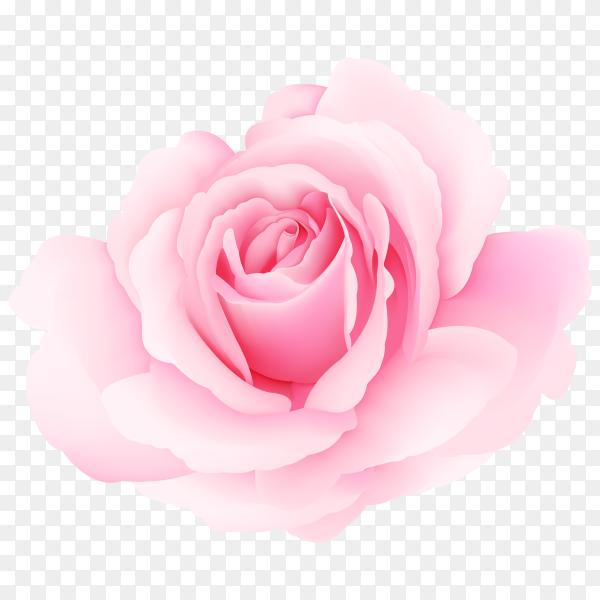 beautiful pink roses vector PNG