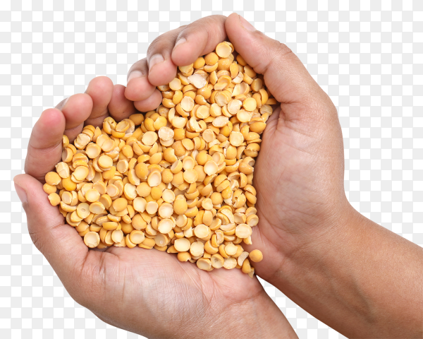 Dried chickpea lentils on transparent background  PNG