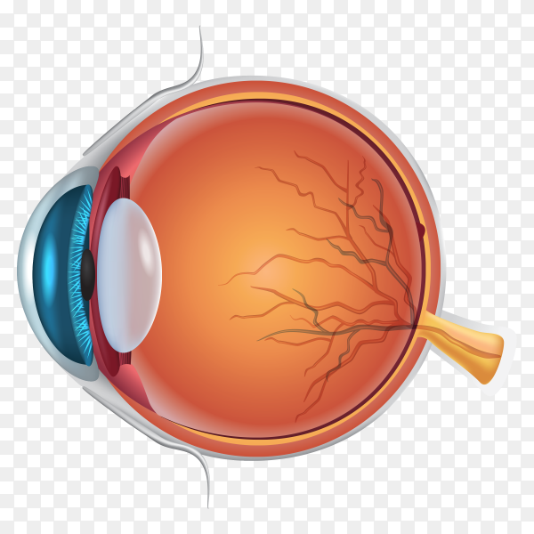 Eye anatomy details clipart PNG