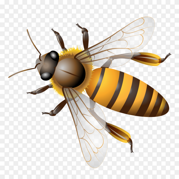 Bee cartoon on transparent background PNG