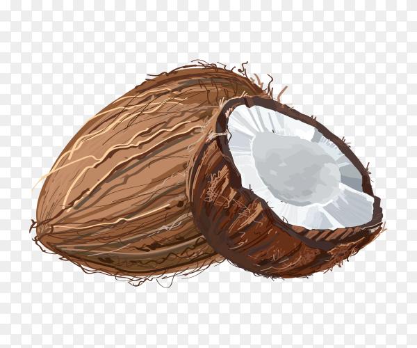 Natural fresh coconut illustration Premium Vector PNG