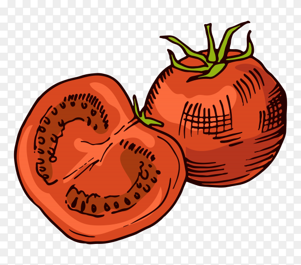 Red tomatos on transparent background PNG