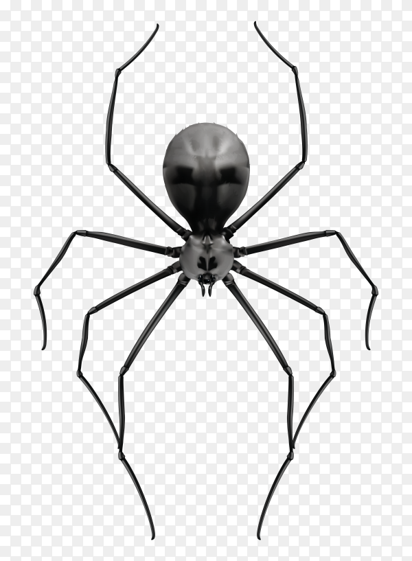Spider isolated Premium vector PNG