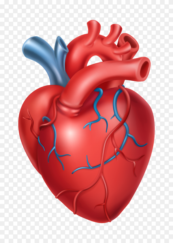 Human being heart Premium vector PNG