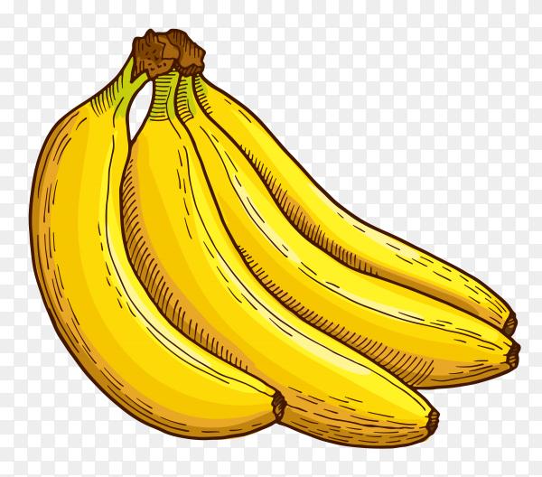 Banana fruit on transparent background PNG