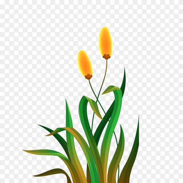 Beautiful flower Premium vector PNG