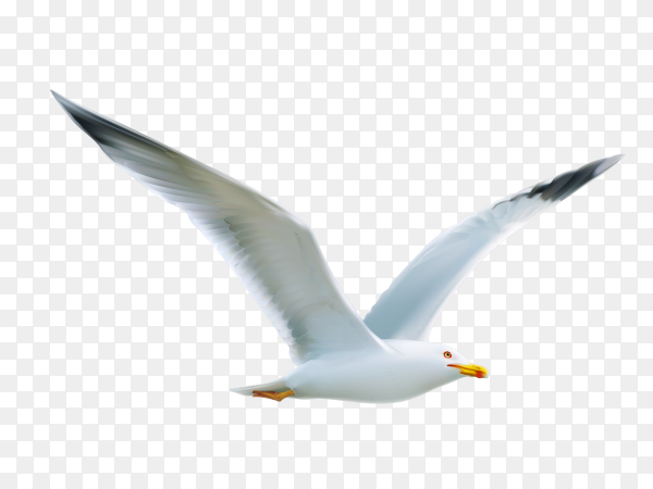 Beautiful gull flying on transparent background PNG