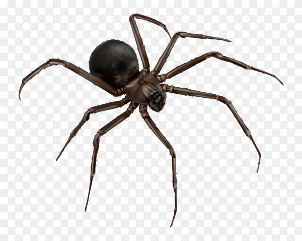 Black spider on transparent background PNG