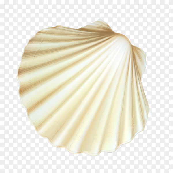 Closed white scallop seashell on coral Clipart PNG