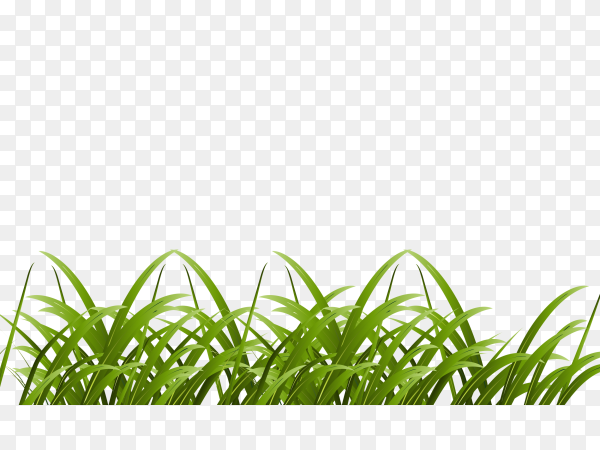 Green grass on transparent background PNG