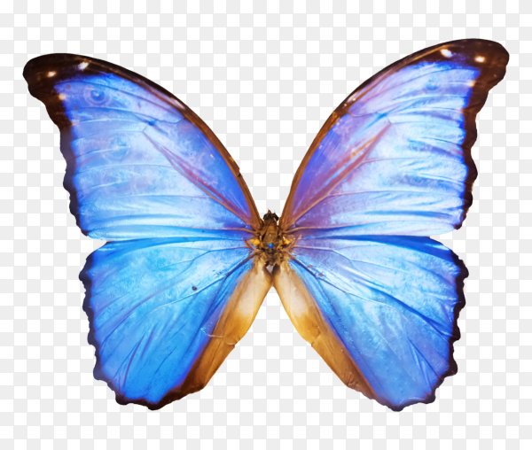 Beautiful butterfly on transparent background PNG