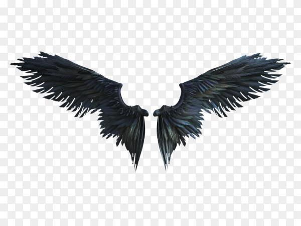 Black wing plumage on transparent background PNG