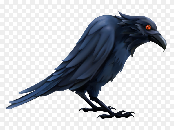 Crow isolated on transparent background PNG