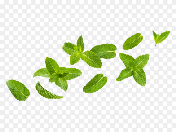Fresh mint leaves  on transparent background PNG