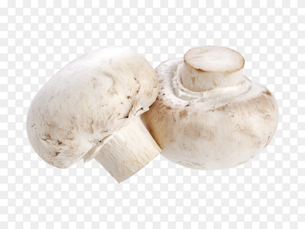 Fresh mushroom isolated  on transparent background PNG