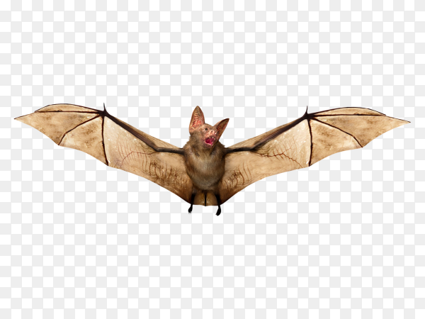 Halloween bat isolated on transparen background PNG