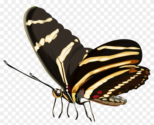 Illustration cartoon butterfly hand drawing on transparent background PNG