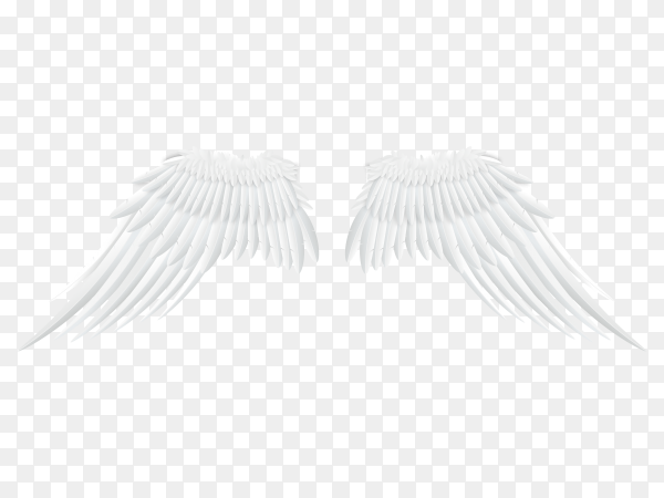 Illustration white  angel wings on transparent background PNG