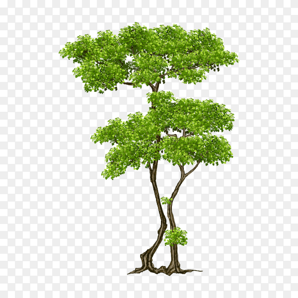 Beautiful green tree illustration on transparent background PNG