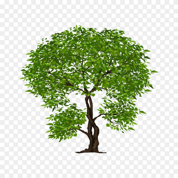 Beautiful green tree illustration premium vector PNG