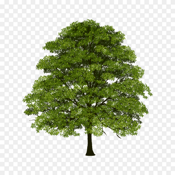 Beautiful green tree isolated on transparent background PNG