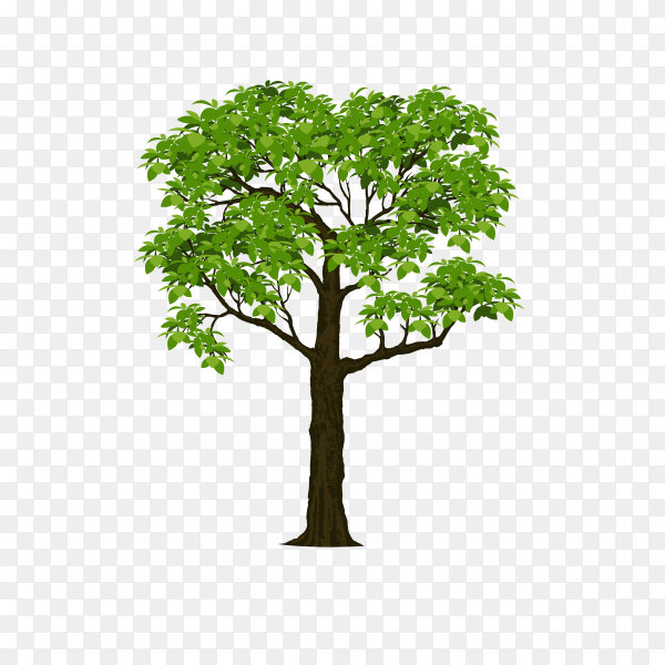 Beautiful tree isolated on transparent PNG