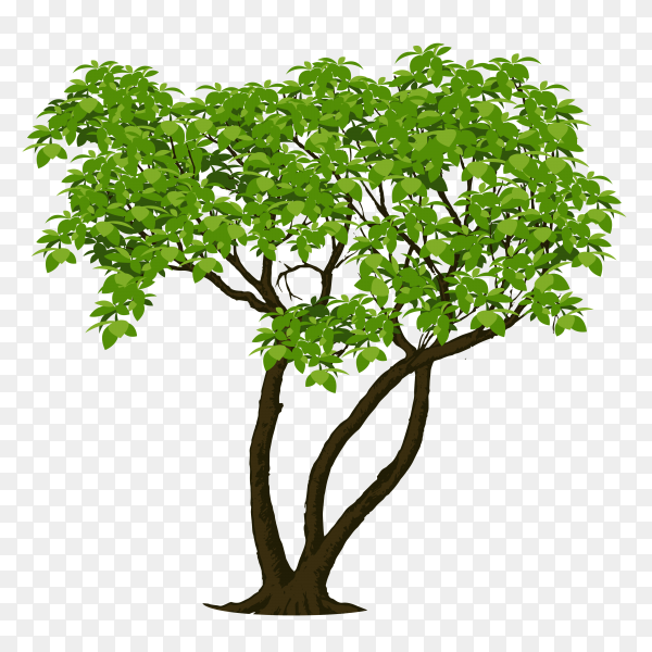 Beautiful tree isolated on transparent background PNG