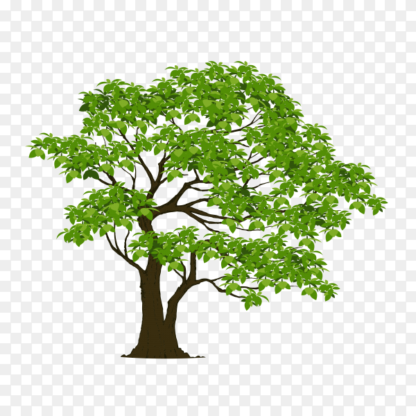 Beautiful tree isolated premium vector PNG