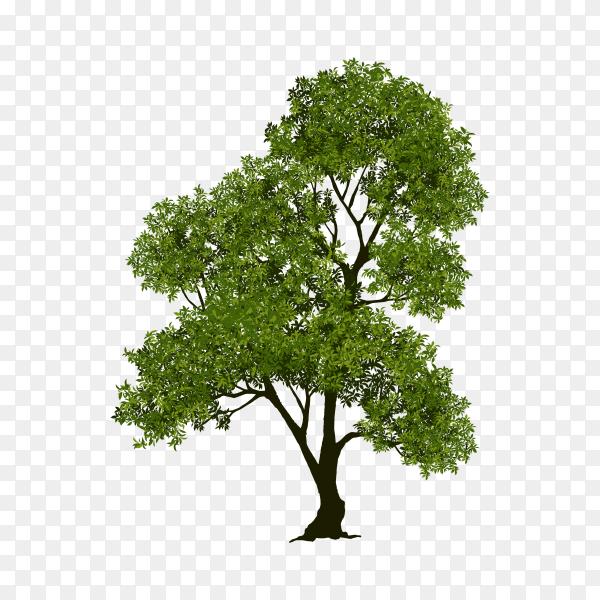 Beautiful tree realistic premium vector PNG
