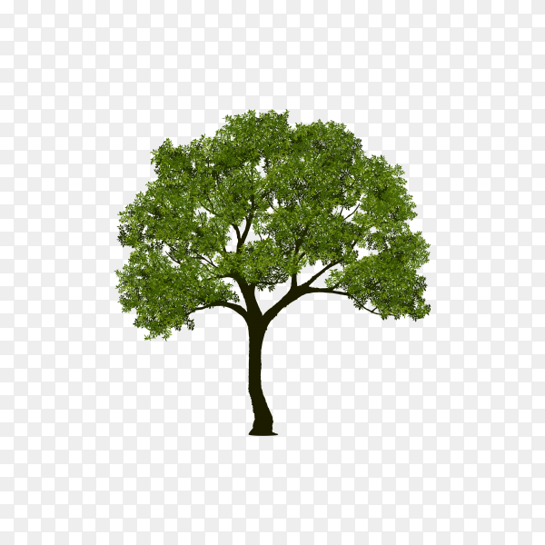 Beautiful tree with green leaf on transparent PNG