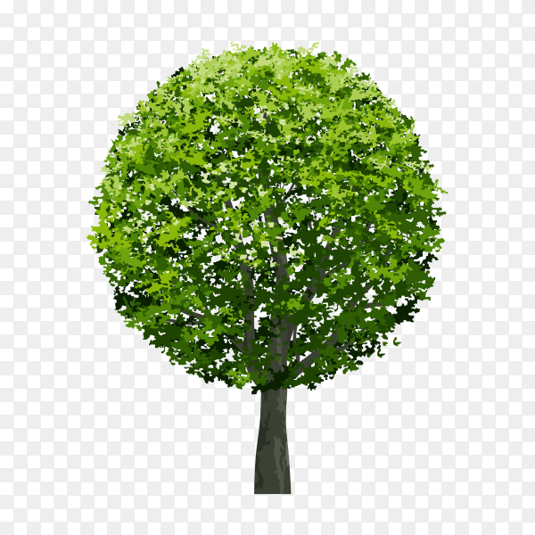 Beautiful tree with green leaf on transparent background PNG