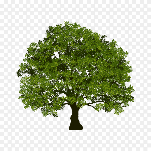 Beautiful tree with green leaf premium vector PNG