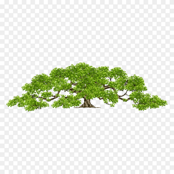 Big green tree isolated on transparent background PNG