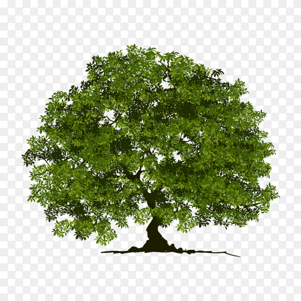 Big green tree on transparent background PNG