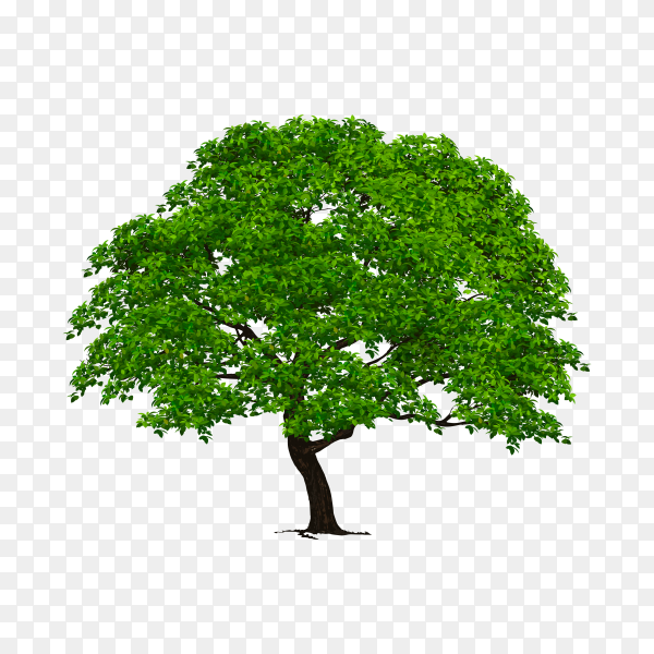 Falt design of tree with green leaves on transparent background PNG