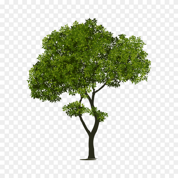 Flat design of green tree isolated on transparent background PNG