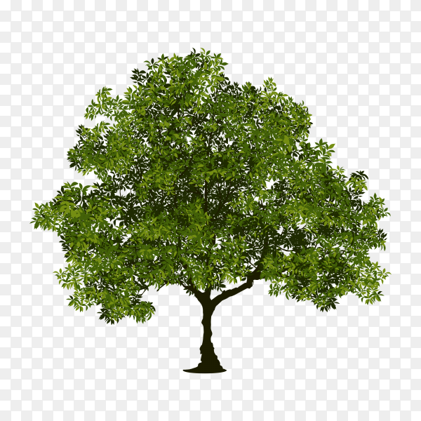 Flat design of green tree on transparent background PNG