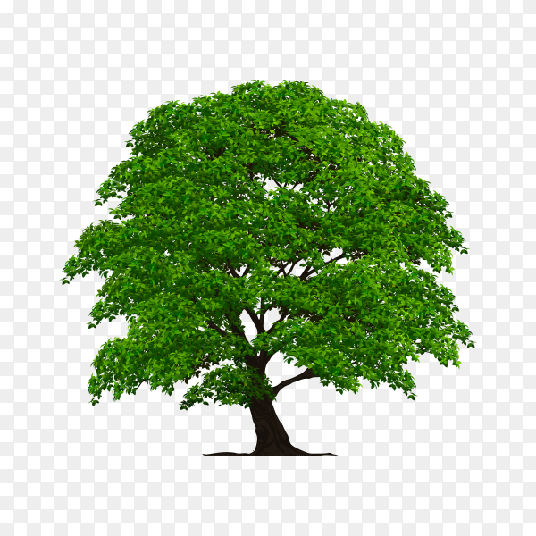 Flat design of tree with green leaves on transparent background PNG