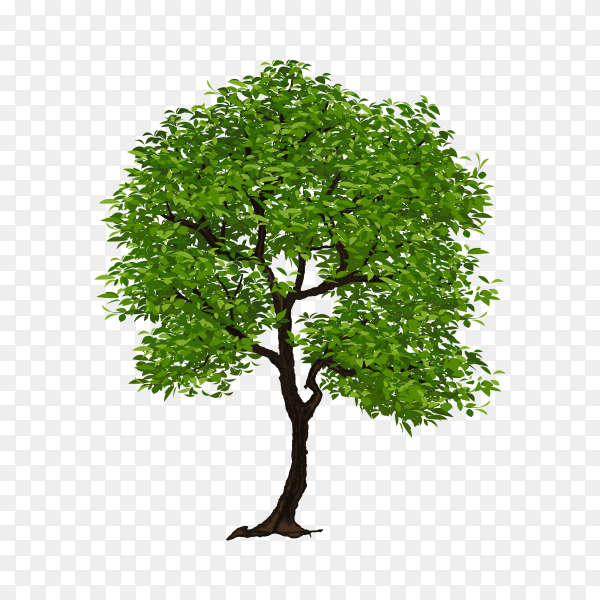 Green tree illustration premium vector PNG