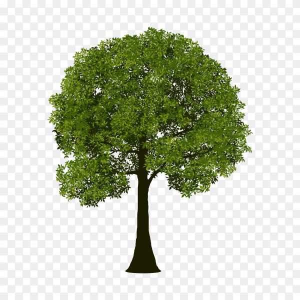 Green Tree isolated on transparent PNG