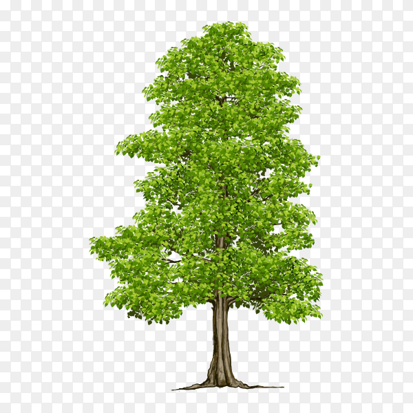 Green Tree isolated on transparent background PNG