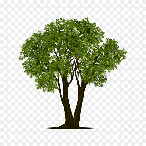 Green tree illustration on transparent background PNG