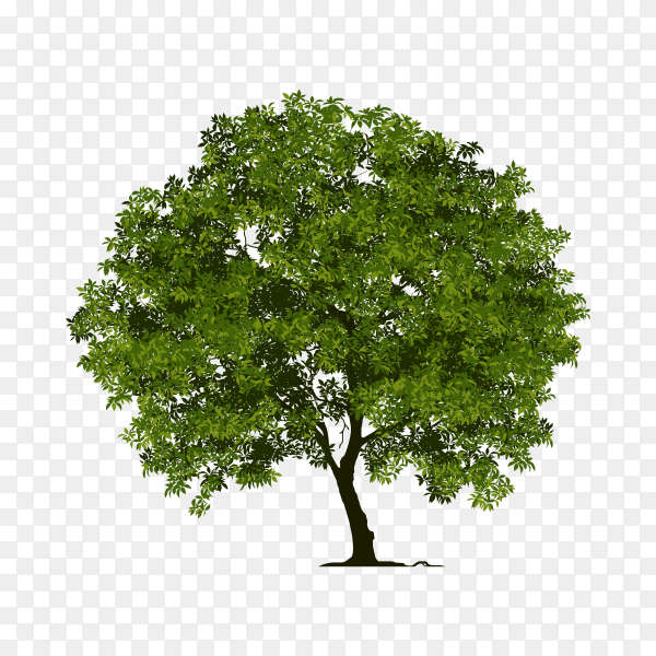 Green tree on transparent PNG