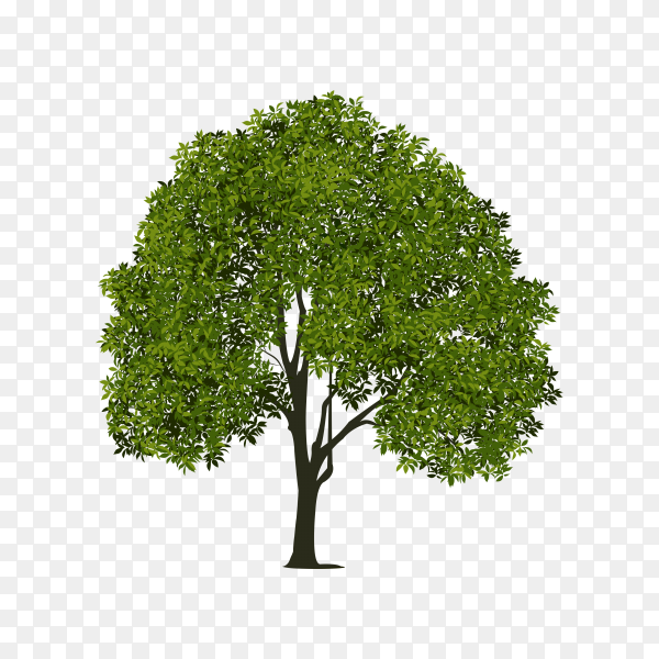 Hand drawing tree on transparent background PNG