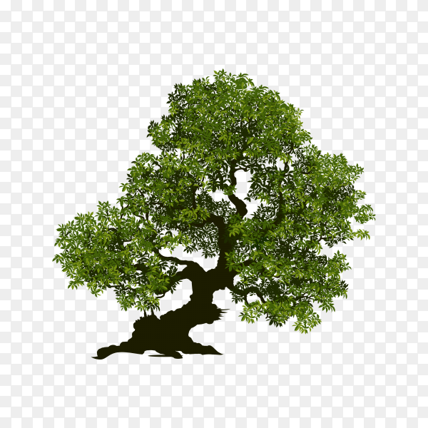 Hand drawn green tree on transparent background PNG