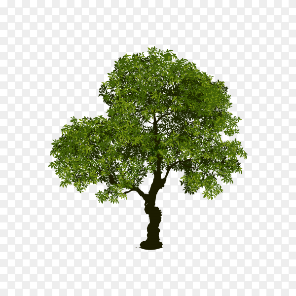 Hand drawn tree isolated premium vector PNG